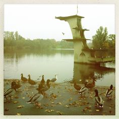 Coate water. Swindon. 2012. High Diving, Uk Homes, Bristol, Cities, Landscapes, Around The Worlds, Boards, England, Memories