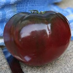 Paul Robeson Tomato - One of the best black heirlooms. Brick-red to black fruits with a smoky, sweet flavor! Vigorous, indeterminate plants bear 7-10 oz beefsteak type fruits which are great for slicing, salads and sandwiches. One of our staff's all-time favorites and enjoys a cult following amongst seed savers. 78 DAYS.