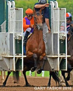 Beholder and Gary Stevens leaving the gate. Beholder wins the Adoration 2016