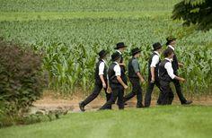 Young Amish Men walking past Corn Field.