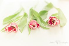 Soft Tulips  Fine Art Nature Photograph  Still Life, Creams, Pinks, Greens, Clean Palette  Home Decor  #fpoe #etsy