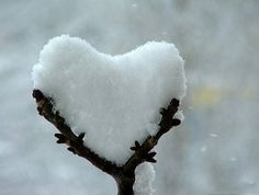 PopMuseSic would like to wish everyone LOVE this Valentines Day. Here are some amazing images of naturally occurring heart shapes in nature: Happy Valentines Day everyone! Heart In Nature, Heart Art, Peaceful Heart, I Love Snow, I Love Heart, Happy Heart, Winter Beauty, Pics Art, Snow
