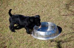 http://absenting.com.pl/zasady-nowoczesnego-szkolenia-psow/ nowoczesne szkolenie psów - modern dog training methods @dogs #dogs #puppy