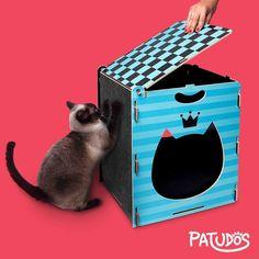 3 EM 1 = Pufe, toca e arranhador Blues. #patudos #gato #pet #cat #toca #petshop