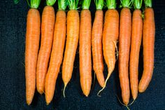 carrot carrot bunch of carrots on a black background