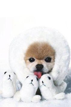 O cachorro mais fofinho do MUNDO!!!