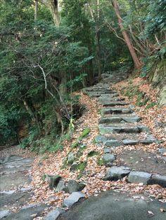 登山道 2016.12.28