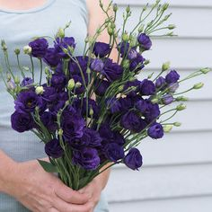 Love this shape and color.  Doublini Blue Lisianthus