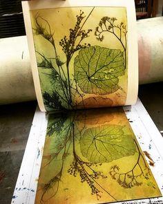 Etching by Jet James Linocut Prints, Art Prints, Block Prints, Animal Prints, Impressions Botaniques, Drypoint Etching, Nature Prints, Art In Nature, Leaf Art