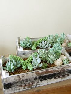 succulents in a wood planter