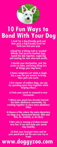 10 Fun Ways to Bond With Your Dog