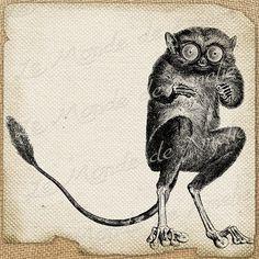 Oddity   monkey animals wild ads nature large image by JLeeloo2, $1.00