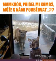 Funny Cats Acting Like Humans Compilation 2015 - Funny Animal Quotes - - Funny Animal Pictures Of The Day 20 Pics The post Funny Cats Acting Like Humans Compilation 2015 appeared first on Gag Dad. Funny Animal Jokes, Funny Cat Memes, Really Funny Memes, Cute Funny Animals, Funny Animal Pictures, Funny Cute, Funny Dogs, Cute Cats, Hilarious Pictures