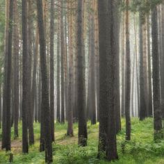 Siberian summer forest by Artem Kreo on 500px