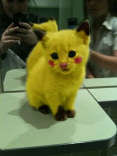 Pikachu!  I wanna laugh because it's so cute but I feel so bad  for the poor kitty
