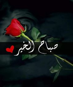 Good Morning Gif, Islamic Pictures, Beautiful Roses, Christmas Ornaments, Holiday Decor, Cards, Blog, Jasmin, Arabic Quotes