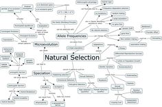 Connecting Concepts Natural Selection
