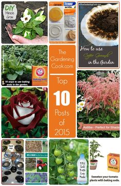 8 out of 10 of the most popular posts for The Gardening Cook in 2015 are garden related. Is your favorite article in my top 10 picks? Benefits Of Gardening, Gardening Tips, Flower Gardening, Diy Planters, Garden Planters, Garden Projects, Garden Ideas, Diy Projects, Flowers Perennials