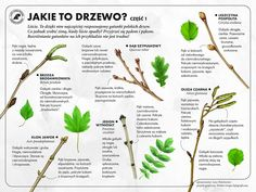 Infographic, Survival, Education, Fruit, Montessori, Homeschooling, Outdoor, Geography, Outdoors