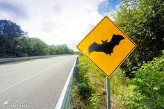 Bat crossing sign, near Calakmul, Mexico