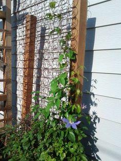 s 17 ways to build a gorgeous garden trellis this summer, gardening, Lean old mattress springs on a garden wall Garden Junk, Diy Garden, Garden Projects, Garden Art, Diy Trellis, Garden Trellis, Trellis Ideas, Old Mattress, Mattress Springs