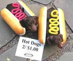 Sell themselves for money | 24 Things Your Dachshund Can Do For You