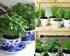 The easiest ever DIY garden you can set up inside your home. Home Vegetable Garden, Herb Garden, Garden Plants, Patio Greenery Ideas, Gardening For Dummies, Comment Planter, How To Make Terrariums, Pot Plante, Plants Are Friends