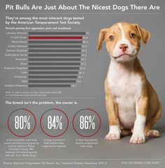 Why Its Ridiculous People Still Think Pit Bulls Are Inherently Mean (INFOGRAPHIC)