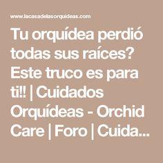 Tu orquídea perdió todas sus raíces? Este truco es para ti!!   Cuidados Orquídeas - Orchid Care   Foro   Cuidados Orquídeas – Orchid Care