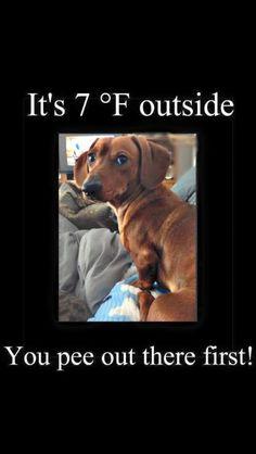 Freeze your Weiner off!!!