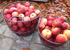 5 Gallons of Apple Juice, Three Hard Cider Recipes - Part 1: Pasteurization & Pitching | E. C. Kraus Homebrewing Blog