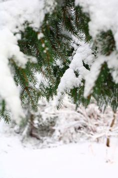 Ensilumi maalasi maisemaa viime yönä. Snow, Outdoor, Outdoors, Outdoor Games, The Great Outdoors, Eyes, Let It Snow