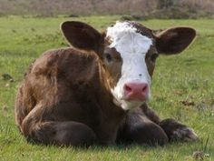 A calf was brutally stabbed in its rectum and the perpetrator has yet to be found. Urge investigators to find and arrest the attackers before more innocent animals become victims of vicious, random acts of violence.