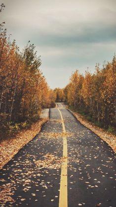 Halloween / Fall backgrounds • like if you save/use