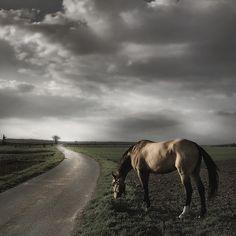 "allmybeautifulfriends:    photo by Dan 65 ""Horse"" - flickr"
