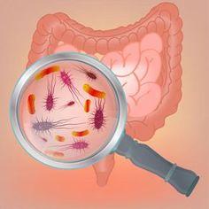 Quanto sono importanti gli integratori di probiotici? Scopriamo assieme che differenza c'è probiotici e fermenti lattici e quali sono i ceppi più sfruttati.