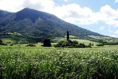 Sugar Cane fields with Mt Liamuiga in the background