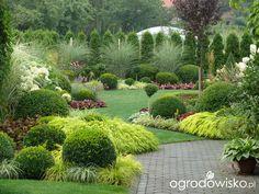 ) strona 134 Forum ogrodnicze Ogrodowisko is part of Small garden landscape - Small Garden Landscape, Landscape Design, Garden Design, Back Gardens, Outdoor Gardens, Topiary Garden, Sloped Garden, Front Yard Landscaping, Shade Garden