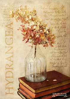 Hydrangea by Kerstin Frank art, via Flickr