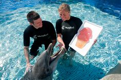 Nellie celebrates her 59th birthday with a special cupcake at Marineland Dolphin Adventure.