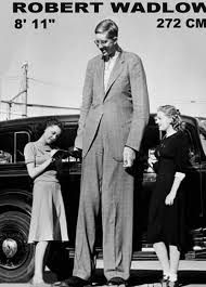 world's tallest person ever lived - Google Search | Worlds tallest ...