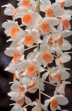 How Not to Kill Your Orchid --> http://blog.hgtvgardens.com/nursery-school-an-experts-eight-ways-to-kill-your-orchid/?soc=pinterest