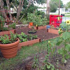 Fall planting in vegetable garden.