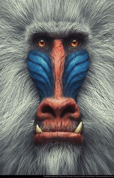 Portrait Close-up Mandrill - Baboon - Monkey Rare Animals, Animals And Pets, Funny Animals, Wild Animals, Primates, Mammals, Beautiful Creatures, Animals Beautiful, Beautiful Snakes