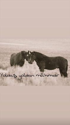 Eminem, Motto, Karma, Serenity, Istanbul, Moose Art, Love You, Horses, Photography