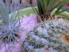 Succulents Cactus Flowers 19 | Flickr - Photo Sharing!
