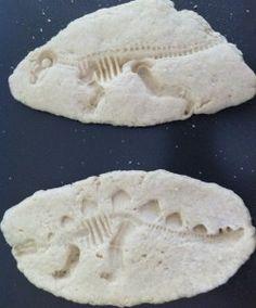 dinosaur fossills
