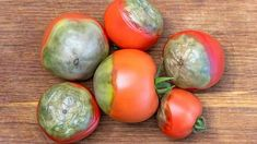 Easter Eggs, Flora, Vegetables, Milan, Gardening, Tomatoes, Chemistry, Lawn And Garden, Plants