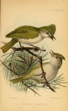 ser.2:v.6=no.21-24;General Index (1865-1870) - Ibis. - Biodiversity Heritage Library