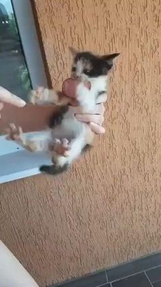 Funny Cute Cats, Cute Baby Cats, Funny Cats And Dogs, Cute Little Animals, Cute Funny Animals, Kittens Cutest, Funny Kittens, Dessin Game Of Thrones, Gato Gif